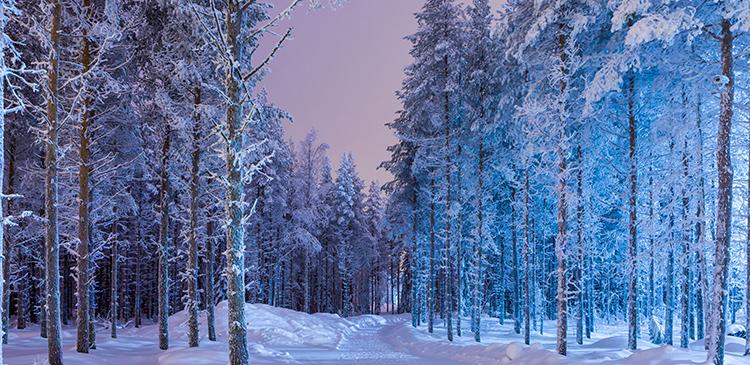 フィンランドの写真