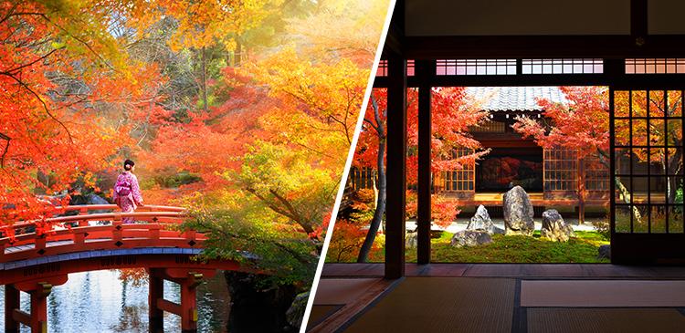京都 ツアー写真