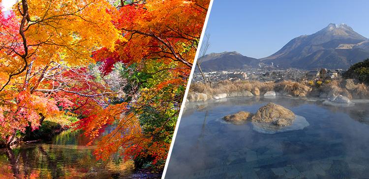 別府温泉+由布院+博多 ツアー写真