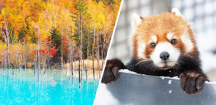 札幌+定番バスツアー「旭山動物園&美瑛」ツアー写真
