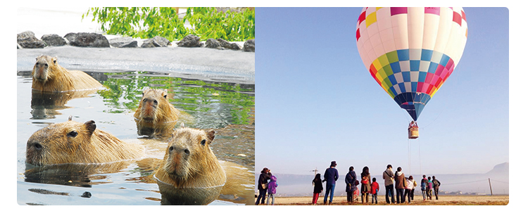 大自然を満喫!熊本の人気アクティビティオンライン体験ツアー
